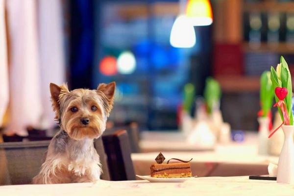 Animais nos Restaurantes