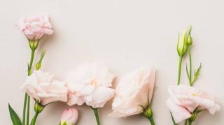 Primavera na Bricotintas