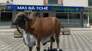Restaurante do Boi